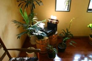 いま観葉植物はどんな種類が人気なの?育てやすい人気観葉植物10選