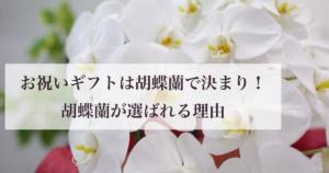 お祝いギフトは胡蝶蘭で決まり!選ばれる理由や注意点は?