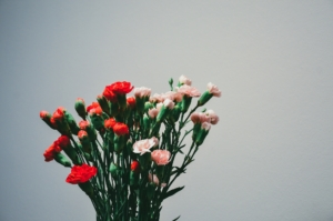 観葉植物を母の日に贈ろう。選ぶ時のポイントや人気の観葉植物を紹介