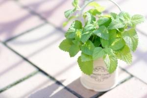 胡蝶蘭のお手入れ方法!水やりや肥料、季節ごとのお手入れポイント