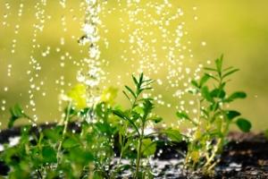 観葉植物の適切な水やり方法。季節別のタイミングなどをご紹介