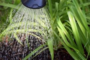 観葉植物の水やり頻度は?夏や冬のタイミングと注意点
