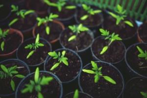 観葉植物に欠かせない赤玉土の役割とは?適切な配合で長持ちさせよう