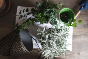 観葉植物の簡単なお手入れ方法。忙しい人も育てやすい植物をご紹介