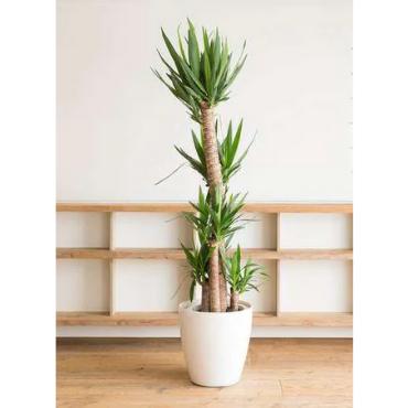 植物 わからない 観葉 名前
