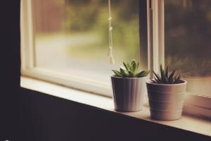 観葉植物に虫がつく原因とは?予防で観葉植物を守ろう