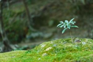 胡蝶蘭の栽培は難しい?胡蝶蘭の栽培方法と栽培農家について知ろう!