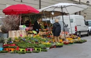 観葉植物の購入時期や購入後のケア。初心者も安心の買い方ガイド