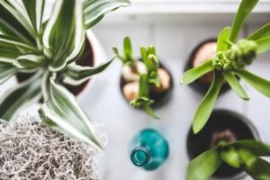観葉植物のギフトはおしゃれ。お祝いシーンごとにおすすめの6選