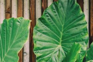 フラワーアレンジメントのグリーン系。ギフトや自分用に安らぎの花を