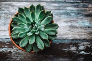 観葉植物に白い斑点?病気や害虫のトラブル対処法や予防方法をご紹介