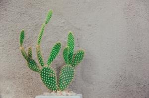 観葉植物の植え替え業者はある?プロが代行してくれるサービス内容