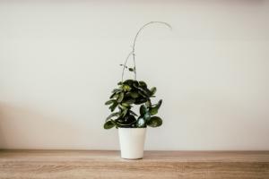 観葉植物でおすすめの小さい種類は?育てやすくおしゃれなものを紹介