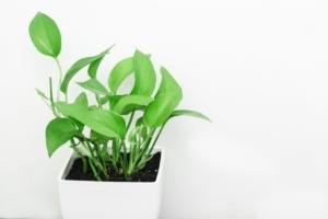 観葉植物で人気の室内向け品種6選。育てやすさ抜群で優雅な見た目