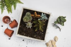観葉植物は赤玉土のみで大丈夫?室内で抵抗なく使える土とは