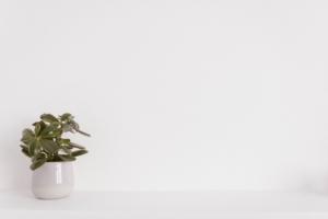 観葉植物に白カビが発生。知っておきたい原因や対処方法とは