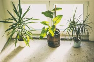 観葉植物はお祝いに人気のギフト。後悔しない選び方とおしゃれな種類