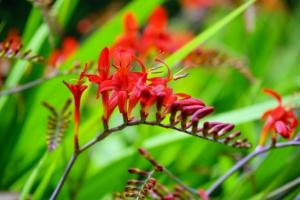 観葉植物の中でも赤い葉や花をもつものは?人気種類と基本の育て方