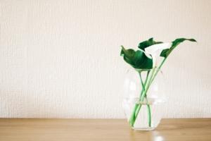 観葉植物でお洒落な水栽培に挑戦。やり方とおすすめの植物