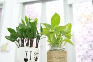 忘れてしまった観葉植物の種類を調べる方法とは?検索サイトもご紹介