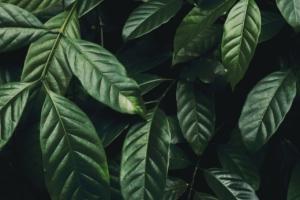 観葉植物の葉がベタベタに!病気の原因と対策方法