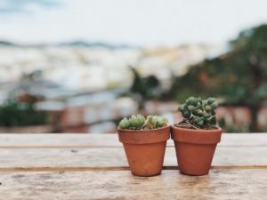観葉植物の植え替え方法を解説。失敗しないためのポイントとは