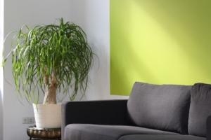 観葉植物が持つ風水的意味とは?ギフトに素敵な花言葉もご紹介