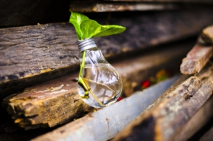 観葉植物を水挿しで育てるコツとは。簡単でおしゃれな増やし方