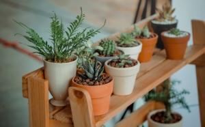 観葉植物の肥料の種類と与え方。季節ごとの頻度や注意点は?