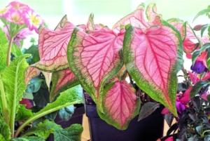観葉植物のコバエの予防と駆除。虫嫌いでも簡単にできる方法は?