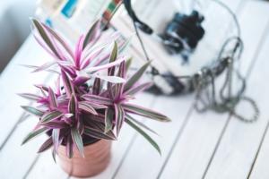 観葉植物もピンクと緑の葉でこんなに華やか。おすすめの種類と育て方