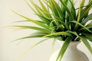 観葉植物に白い粉がつく原因とは?早めの対処で手遅れを防ごう