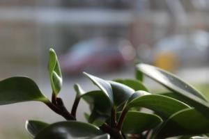 観葉植物を置くなら何がおすすめ?場所別や大きさ別などご紹介