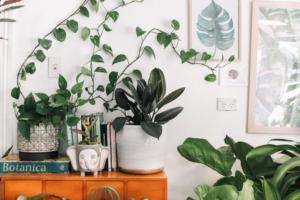 人気の観葉植物5つの育て方を解説。基本をおさえて長く楽しもう