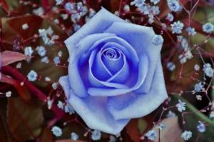プリザーブドフラワーで青い花の魅力を堪能しよう。ギフトにも最適