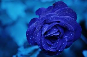 プリザーブドフラワーの青バラを贈ろう。おすすめのアレンジも紹介