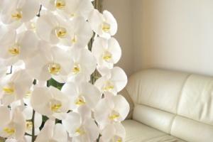 これだけは気をつけたい。胡蝶蘭を贈るときの「マナー」と「タブー」