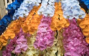 色の種類が豊富な胡蝶蘭、色の意味とシーン別のオススメ色を知ろう