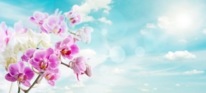 胡蝶蘭の寿命知ってる?長く楽しむための2つのこと