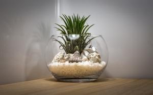 観葉植物で手入れ不要のものは?育てやすい種類とフェイクグリーン