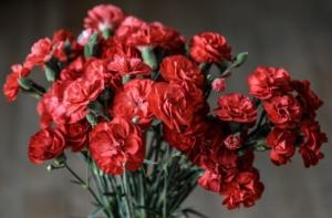 カーネーションの種類と育て方。花を長く楽しむためのポイントは?