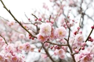 1月に咲く花10選!人気の花の特徴や花言葉、育て方も紹介