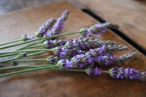 ラベンダーの花言葉は?由来や品種、効能などをご紹介