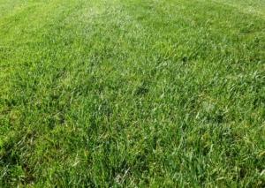 芝生の肥料は目的に合わせて選ぼう。上手な施し方や頻度も紹介