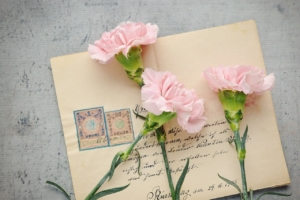カーネーションの種類はとっても豊富。色別の花言葉や人気の品種は?