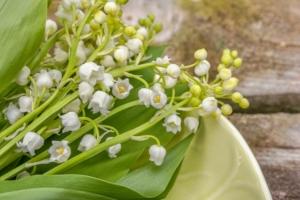 すずらんが見頃になる季節は?種類や花言葉、おすすめの名所も紹介