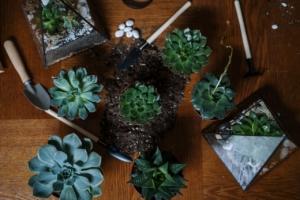 サボテンが元気に育つ土を準備しよう。植え替えの注意点も紹介