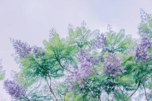 サルスベリの花を毎年楽しむための剪定方法。時期と方法を徹底解説