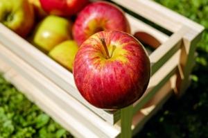 リンゴの種類はいくつある?品種ごとの味の違いや特徴を解説