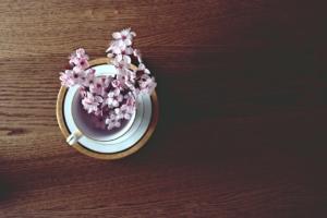 日本の桜の種類は何種類?有名どころの見分け方とミニ桜も紹介